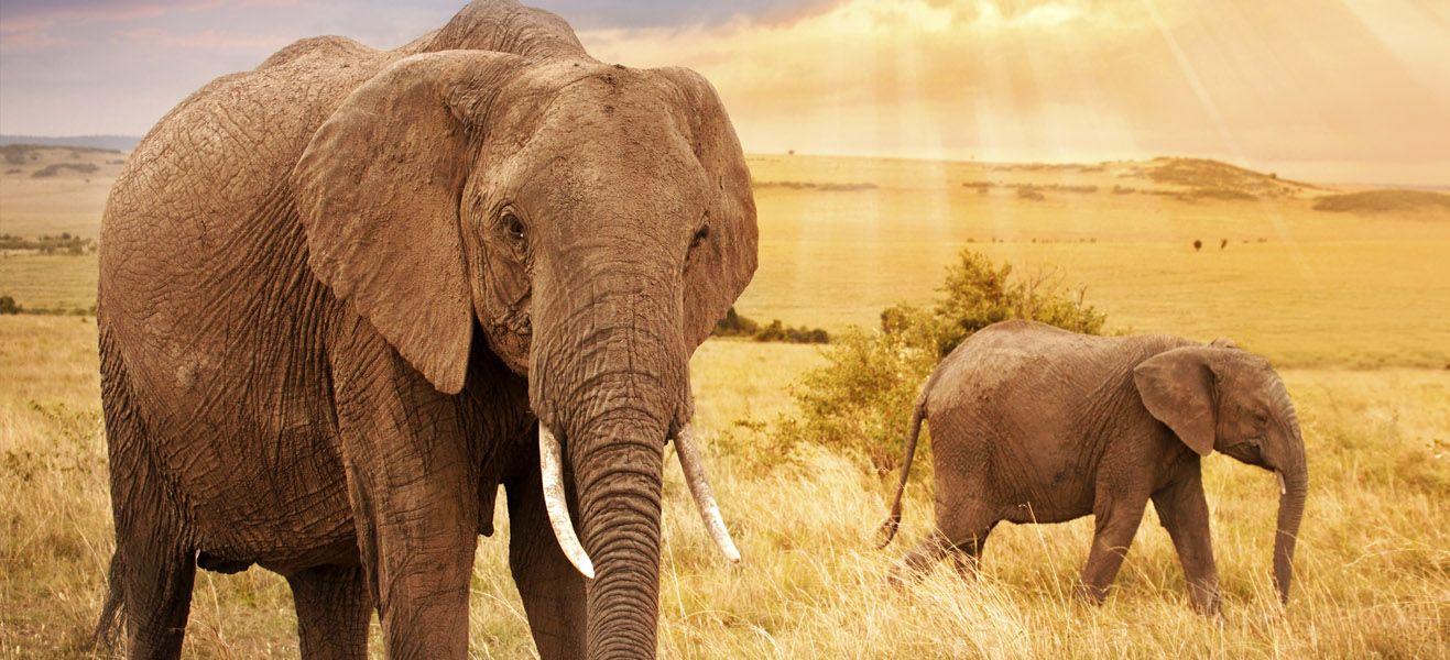 image of elephants in wild africa