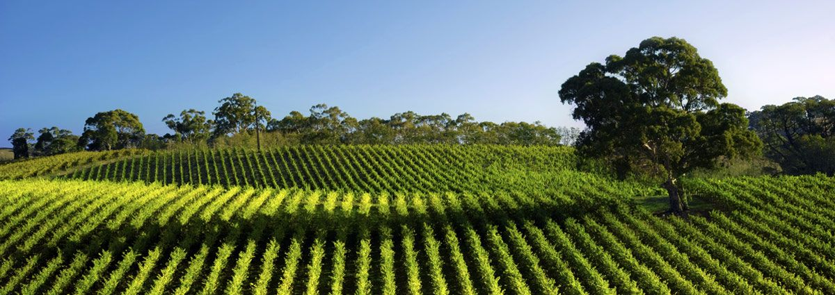 image of barossa valley