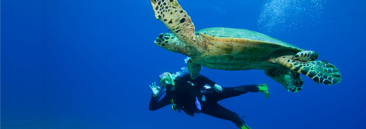 image of a diver with a sea turtle in dahab
