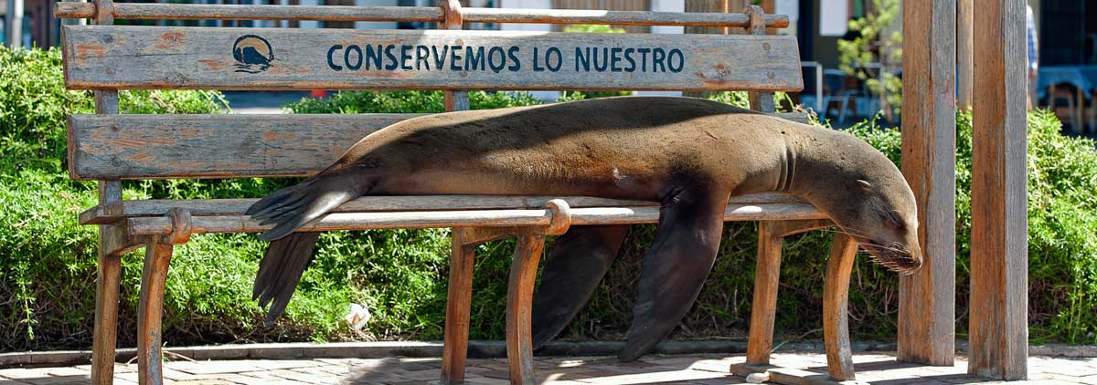 Holiday packages & Hotels in Galapagos Islands