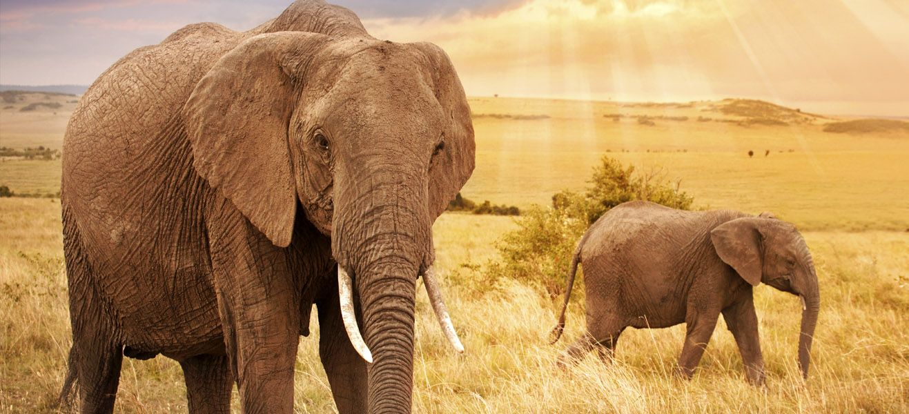 image of elephants in wild africa