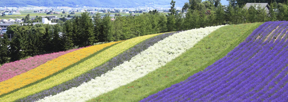 Holiday packages & Hotels in  Hokkaido