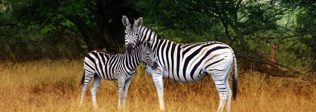 Holiday packages,Hotels and safris in Kruger National Park