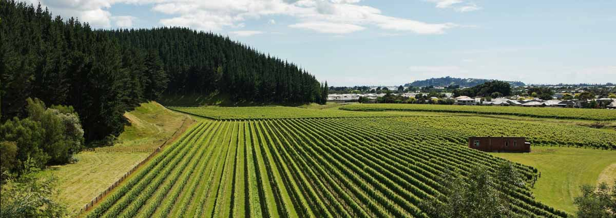 Holiday packages & Hotels in  Napier