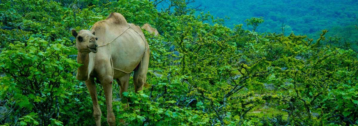 image of salalah nature