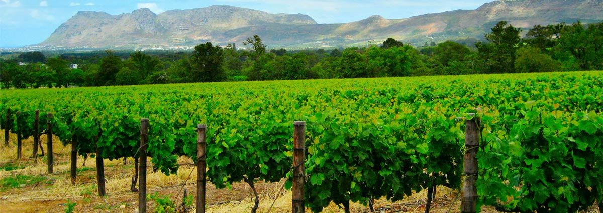 Holiday packages & Hotels in Stellenbosch