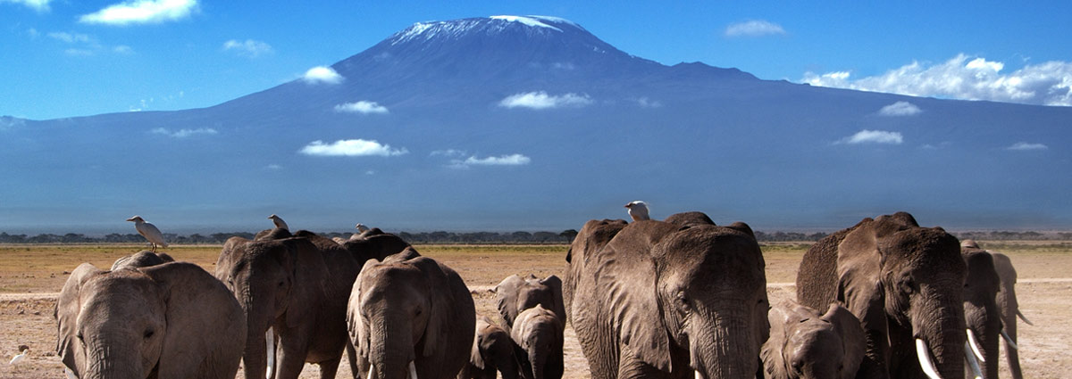 Holiday packages & Hotels in Kilimanjaro