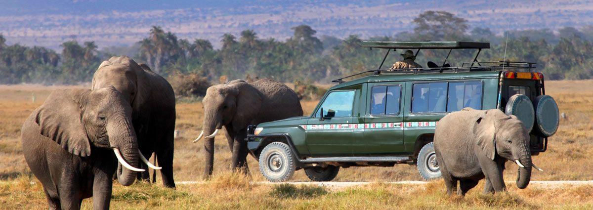 Image of wilde life in Kenya
