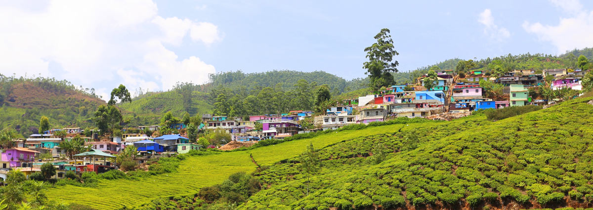 Holiday packages & Hotels in  Munnar