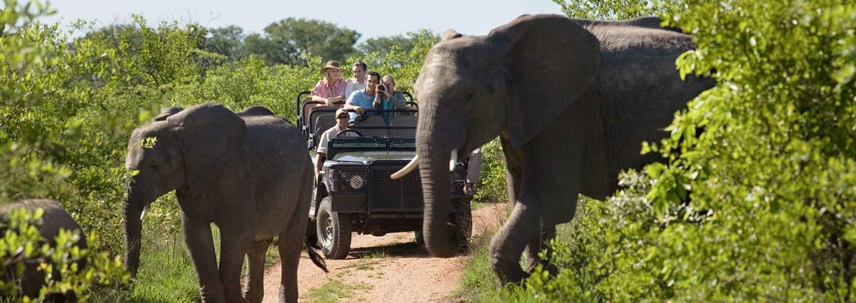 Kruger National Park Safari - 4  Nights