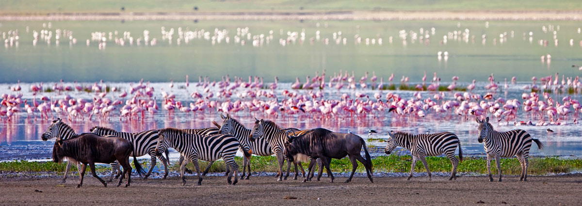 Holiday packages & Hotels in Ngorongoro