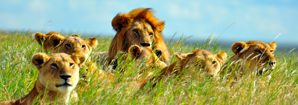 Holiday packages & Hotels in  Serengeti