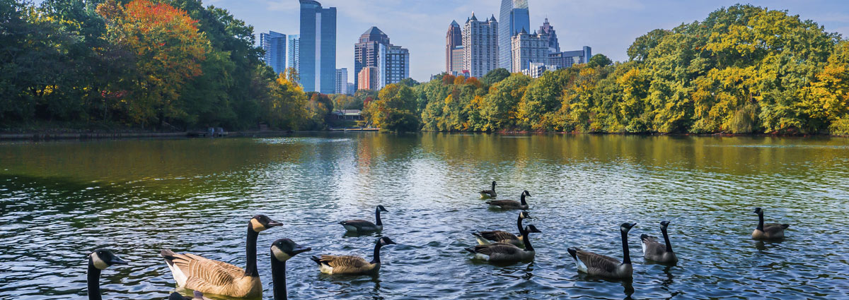 Holiday packages & Hotels in  Atlanta